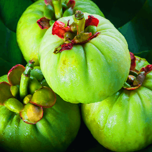 Garcinia Cambogia Extract Nootropic weight loss